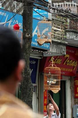 Thú chơi quen mà lạ trên hè phố Hà Nội - 3