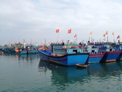 Tỏi cô đơn, thợ lặn và Cá Ông voi ở Lý Sơn - 3
