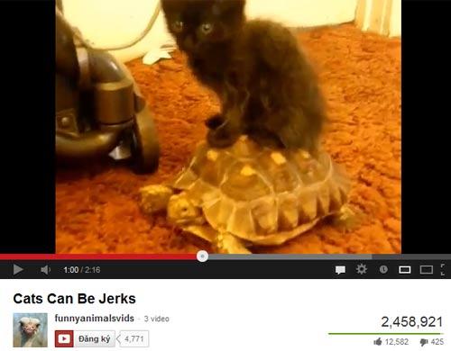 Những chú mèo hài hước - 1