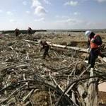 Tin tức trong ngày - Nhật: Quang cảnh sau 2 năm sóng thần tàn phá