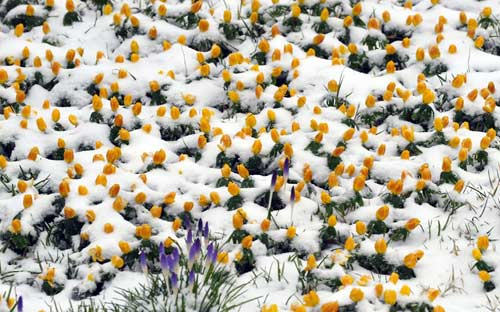 Giao thông châu Âu tê liệt vì bão tuyết - 10