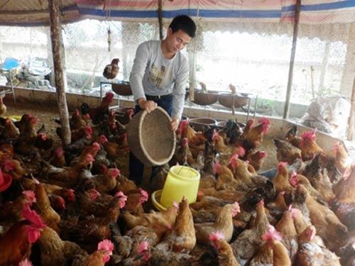 Giá thức ăn chăn nuôi ở VN cao nhất TG? - 1