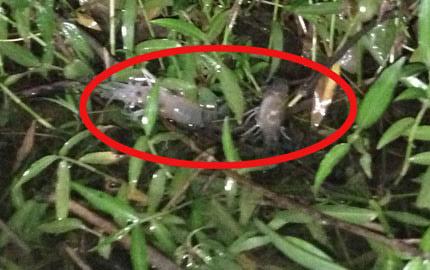 Đổ thuốc trừ sâu xuống sông Đồng Nai - 2