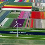Du lịch - Mê hồn những cánh đồng hoa Hà Lan từ trên cao