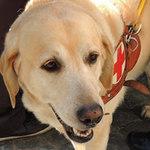 Tin tức trong ngày - Chú chó vinh dự được tân Giáo hoàng chúc phúc