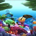 Du lịch - 10 thế giới ngầm tuyệt đẹp dưới lòng biển sâu