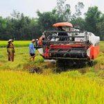 Thị trường - Tiêu dùng - Đề nghị xem lại chính sách tạm trữ lúa