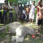 Tin tức trong ngày - Đắk Lắk: Thêm một chú voi con bị chết