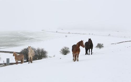 Ảnh đẹp: Ngựa vằn bên hồ - 6