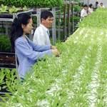 Thị trường - Tiêu dùng - Èo uột FDI nông nghiệp