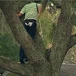 Thể thao - Hy hữu: Đánh golf từ trên cây