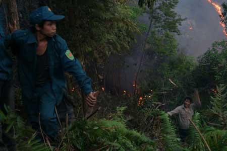 Hơn 700 người cứu rừng cháy ở Lai Châu - 2