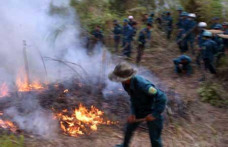 Hơn 700 người cứu rừng cháy ở Lai Châu - 3