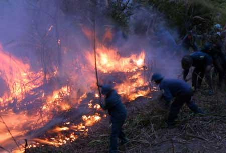 Hơn 700 người cứu rừng cháy ở Lai Châu - 5