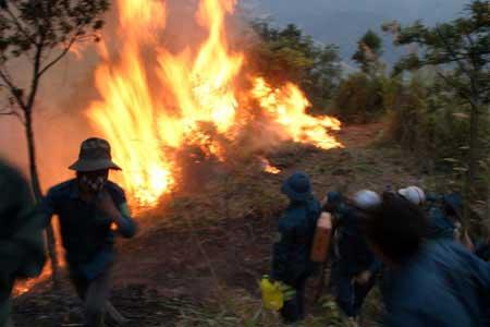 Hơn 700 người cứu rừng cháy ở Lai Châu - 6