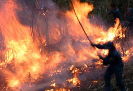 Hơn 700 người cứu rừng cháy ở Lai Châu - 7