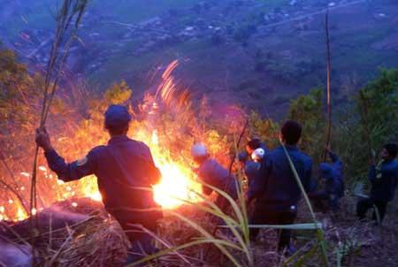 Hơn 700 người cứu rừng cháy ở Lai Châu - 8