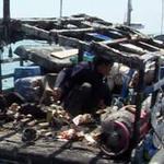 Tin tức trong ngày - Mỹ quan ngại vụ tàu TQ bắn tàu Việt Nam