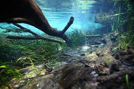 Cảnh tượng tuyệt đẹp dưới những dòng sông 'trinh nữ' - 10