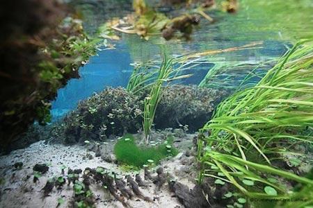 Cảnh tượng tuyệt đẹp dưới những dòng sông 'trinh nữ' - 12