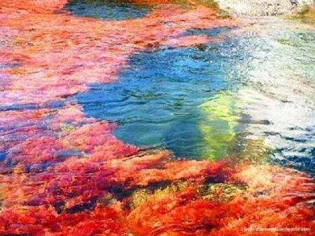 Dòng sông cầu vồng độc đáo ở Columbia - 5