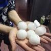 Mưa đá ở Lào Cai: Lạ nhất từ trước tới nay