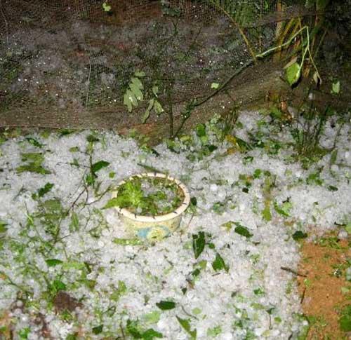 Lào Cai: Lại mưa đá như... ném gạch - 8