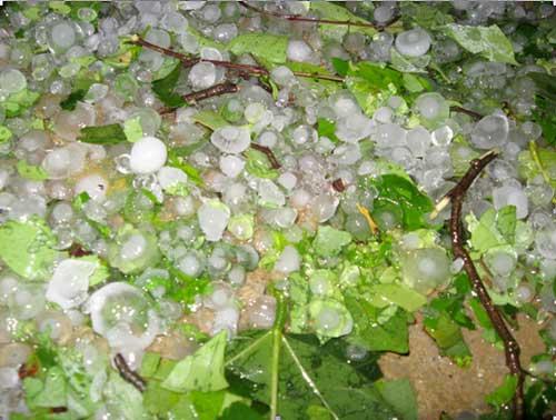 Lào Cai: Lại mưa đá như... ném gạch - 3