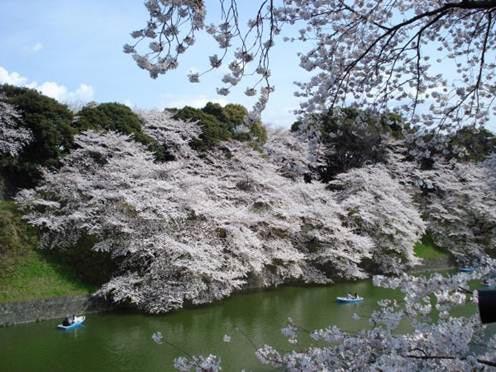 Cẩm nang du lịch Seoul vào mùa hoa anh đào - 1