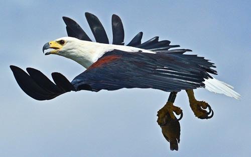 Ảnh đẹp: Chim ưng tấn công công nhân xây dựng - 1