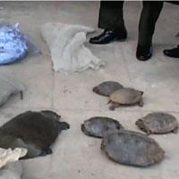 Quảng Trị bắt giữ vụ vận chuyển động vật hoang dã