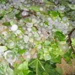 Tin tức trong ngày - Thanh Hóa: Xuất hiện mưa đá ở huyện vùng cao