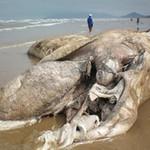 Phi thường - kỳ quặc - Hàng loạt xác chết khổng lồ trên bờ biển VN