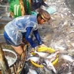 Thị trường - Tiêu dùng - Cứu ngành cá tra: Dẹp loạn đầu mối xuất khẩu