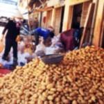 Thị trường - Tiêu dùng - Khoai tây Trung Quốc lại lên Đà Lạt