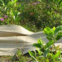 Thảm án xác thiếu nữ mang thai ở nghĩa địa