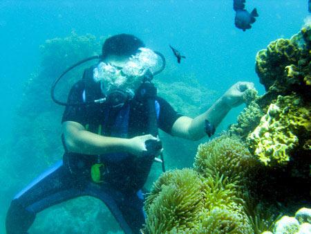 Kỳ thú lặn biển Nha Trang - 1