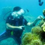Du lịch - Kỳ thú lặn biển Nha Trang