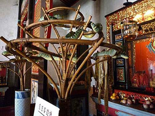 Hai ngôi đền rắn độc và chuột rúc - 4