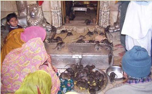 Hai ngôi đền rắn độc và chuột rúc - 8