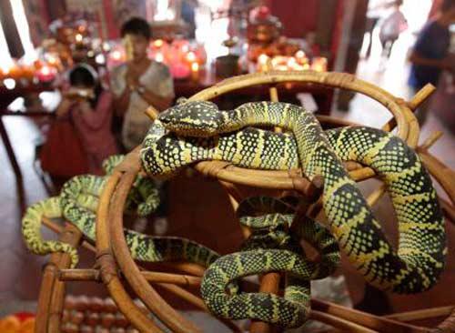 Hai ngôi đền rắn độc và chuột rúc - 2