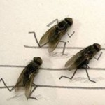 Cười 24h - Câu chuyện ba con ruồi
