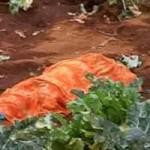 Tin tức trong ngày - Ấn Độ: Hổ vồ chết người, 45 trường học đóng cửa