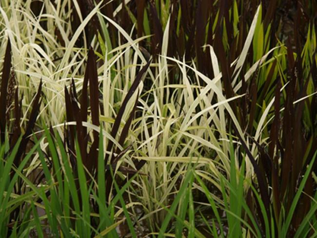Bắt đầu với những cây lúa như có màu sắc khác nhau như thế này.