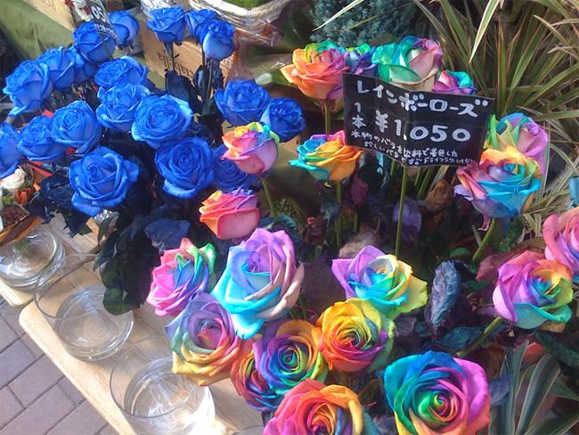 Hoa hồng ngũ sắc do chuyên gia nghiên cứu về hoa người Hà Lan - Peter van de Werken sáng tạo nên