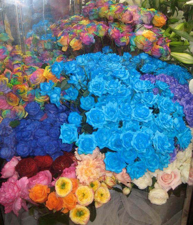Ông đã mua loài hoa hồng có thân dài Vendela, nhuộm thuốc màu cho chúng và giới thiệu trên toàn thế giới.