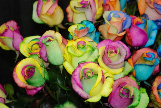 Những bông hồng này vẫn có mùi hương tự nhiên và thời gian sinh trưởng như những bông hoa bình thường.