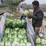 Thị trường - Tiêu dùng - Giá rau trước tết... lao dốc