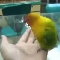 """Video: Đến vẹt cũng thích làm...""""chuyện ấy"""""""