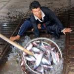 Thị trường - Tiêu dùng - Nga cấm nhập khẩu cá tra Việt Nam